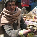 Turtle seller at the Bird Market in Kabul